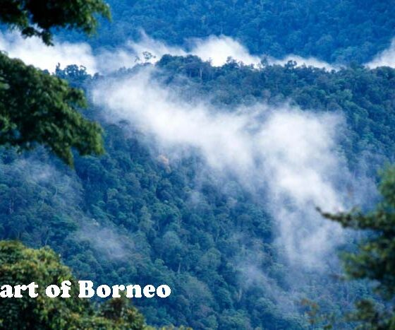 Heart of Borneo